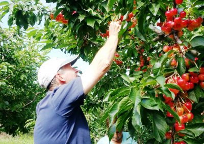 cherries from Ray French orchards